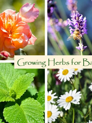 Herbs for Baths: Growing Fresh Herbs for Bath Soaks