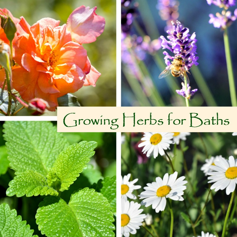 Herbal bath - Growing Herbs for Baths