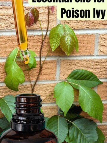 Best Essential oils for Poison Ivy Natural Remedies